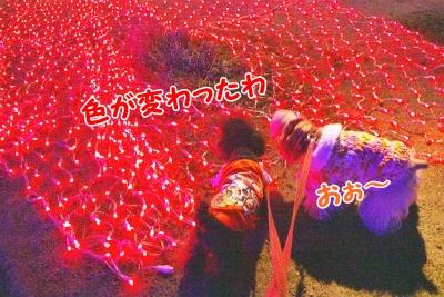 107_20120129221708.jpg