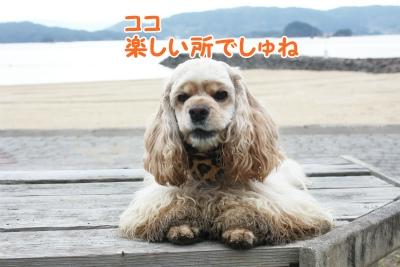129_20111221221416.jpg