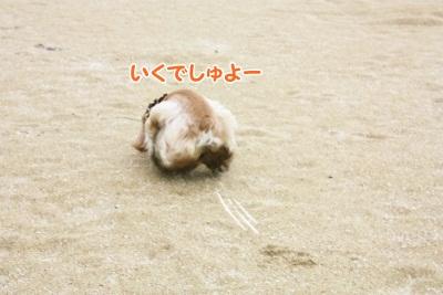 147_20111221221650.jpg