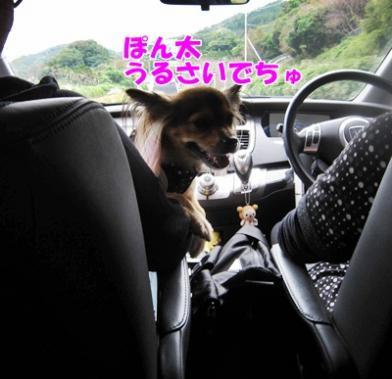 149_20111003212753.jpg