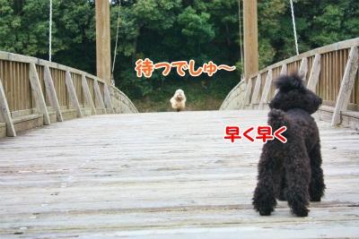 164_20111221221650.jpg