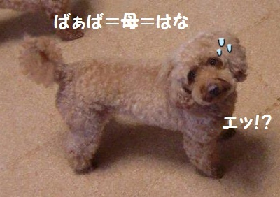 2010_1108_200743-CIMG1180.jpg