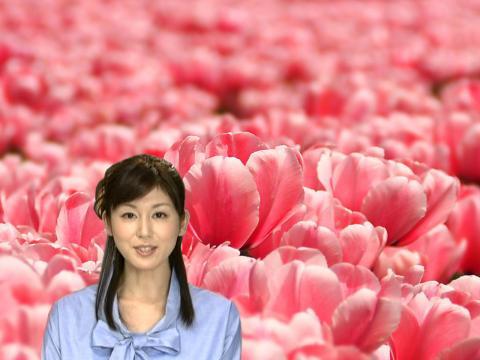 加藤真輝子 赤いチューリップ