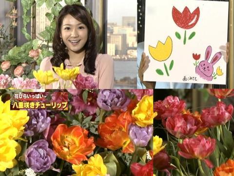 長野美郷 八重咲きチューリップ