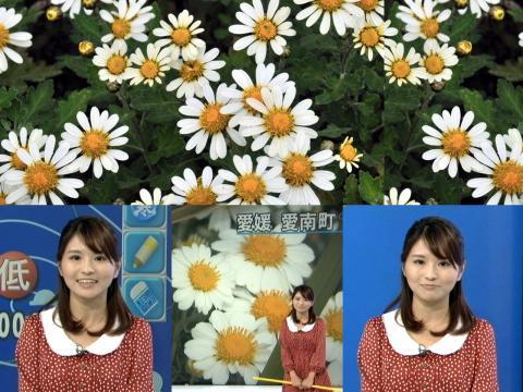岡村真美子 ノジギク咲く