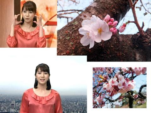 植田萌子 桜ふくらみ、胸も膨らむ