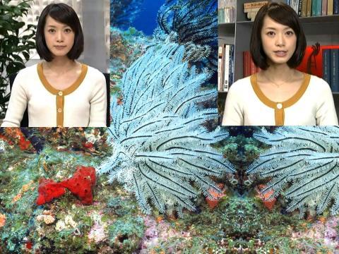 八木 麻紗子 サンゴ