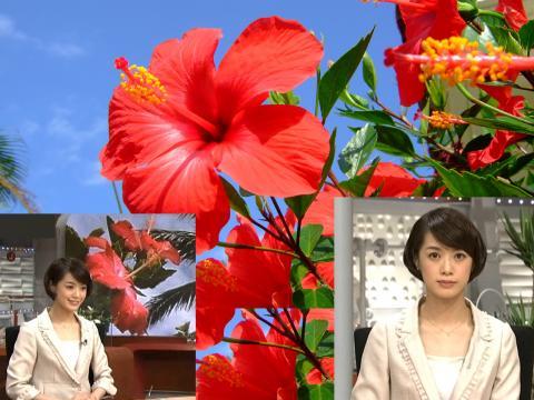 八木 麻紗子 沖縄ではハイビスカス