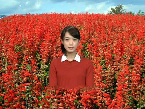 八木 麻紗子 サルビア畑で