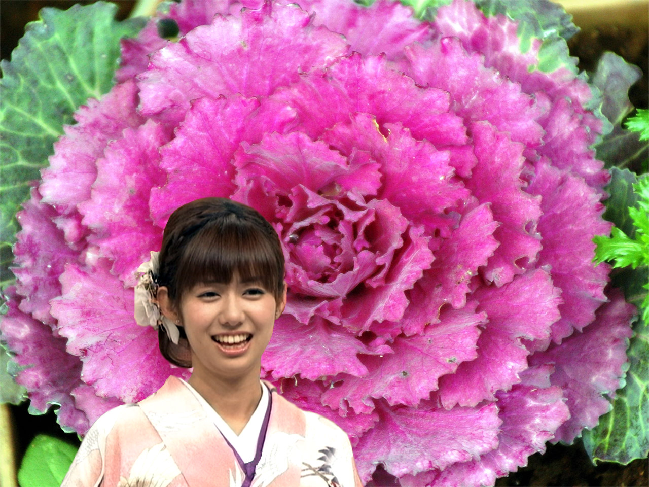 花キャベツと着物と山崎夕貴アナ