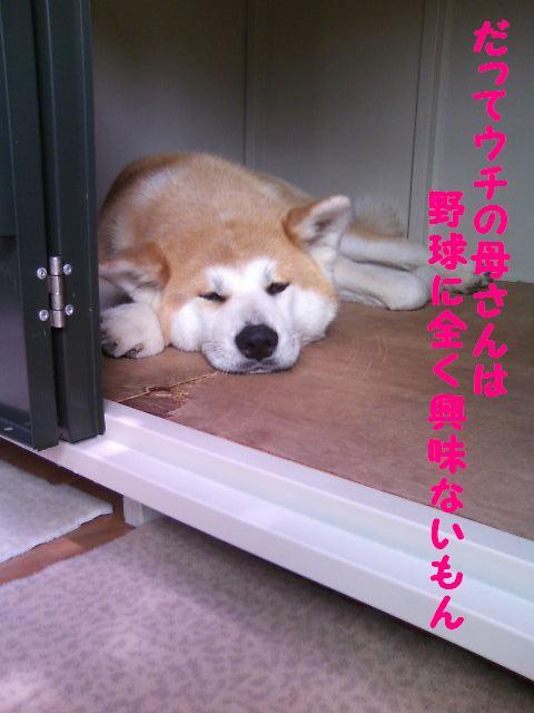小屋で寝てるあん