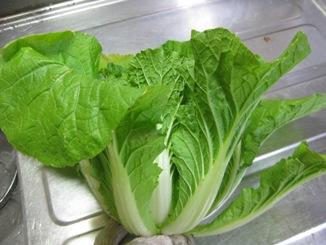 ミニ白菜2(09.1.22)
