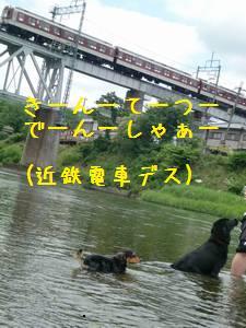 CIMG1762_20090608155208.jpg