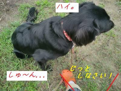 CIMG4014.jpg
