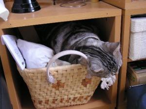 カゴの中で寝るBlue