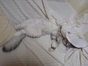 ネコの寝相2