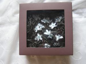 春の花2007-2
