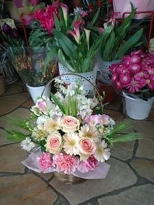 春の花2007-8