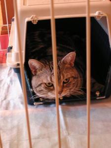 犬小屋に入った猫