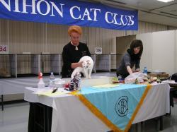 catshow-2