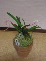 fuukiran1-1