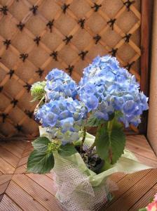花屋のバイト2