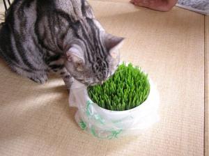 ネコの草2