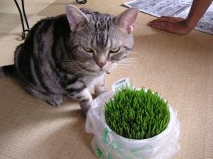 ネコの草3