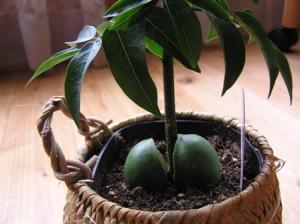 ジャックと豆の木2
