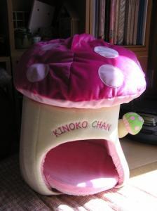kinoko_chan1
