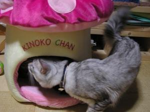 kinoko_chan4
