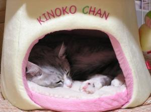 kinoko_chan7