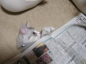 新聞紙の中でPartⅠ