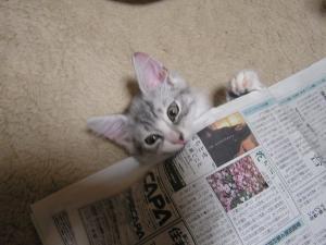 新聞紙の中からPartⅡ