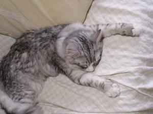 ルイの昼寝3