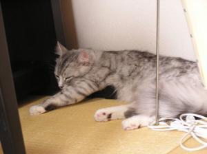 ルイの寝顔1