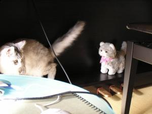 おもちゃのネコ4