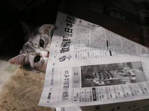 新聞紙との格闘1