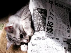 新聞紙との格闘3