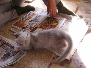 新聞紙へジャンプ