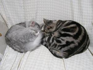 対象のネコ団子