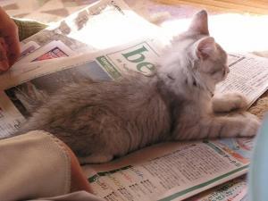 新聞紙を占領