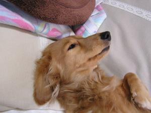 セレブ犬2