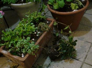 植木鉢のそと