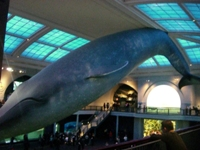 American Museum of Natural History④