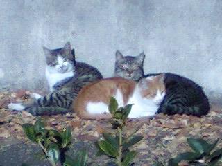 20071216ねこ3兄弟