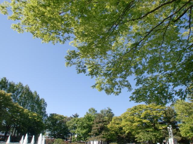 涙の中の虹を見つけに*:・゜.☆ 北の聖地からのセレスチャルメッセージ-tree