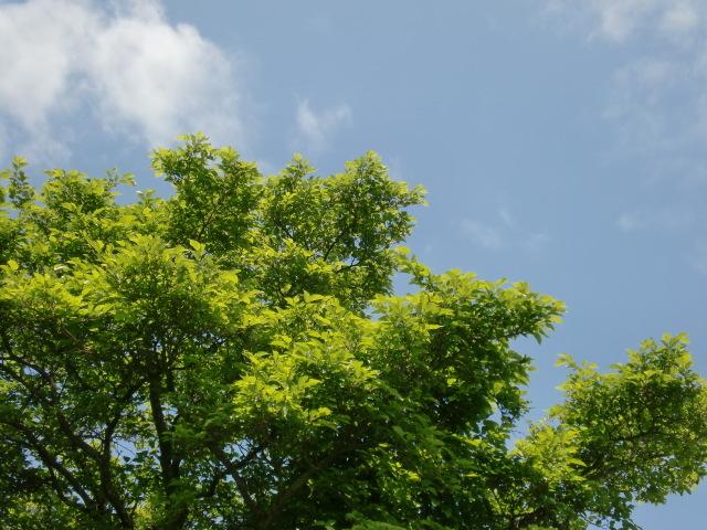 涙の中の虹を見つけに*:・゜.☆ ~セラピールームアルクトゥールス~-tree