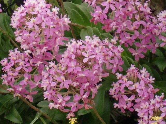 涙の中の虹を見つけに*:・゜.☆ ~セラピールームアルクトゥールス~-flower
