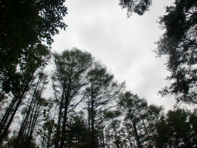 涙の中の虹を見つけに*:・゜.☆ ~青森市セラピールーム アルクトゥールス~-tree